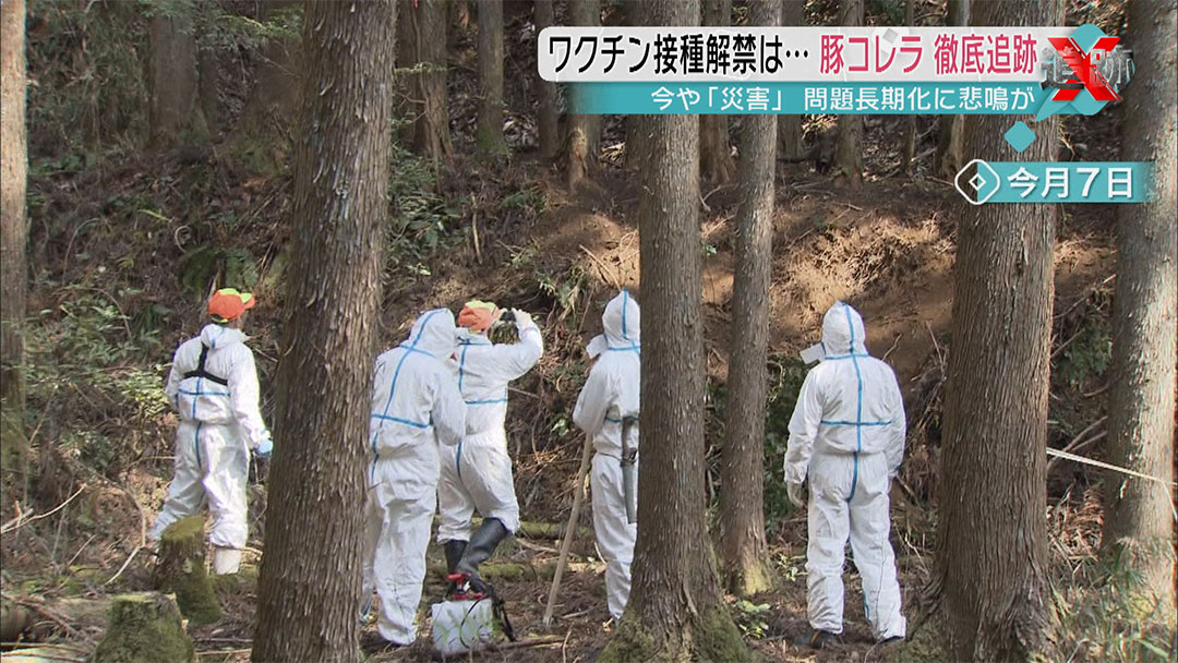 Disaster of Classical Swine Fever in Japan