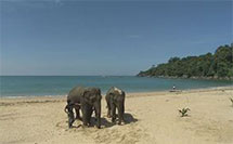2007 Travel Thailand with Elephant